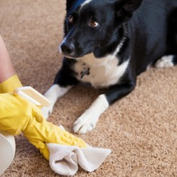 Keeping a House Clean with Pets...